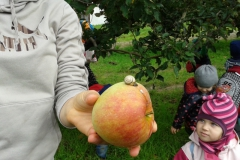 almaszuret (1)