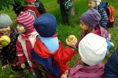 almaszuret (2)