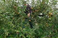 almaszuret (3)