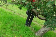 almaszuret (4)